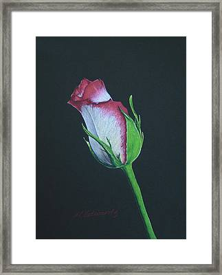 Rose Bud Framed Print by Marna Edwards Flavell