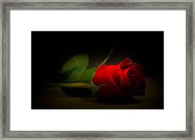 Rose Bud Framed Print