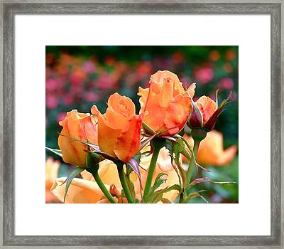 Rose Bunch Framed Print by Rona Black