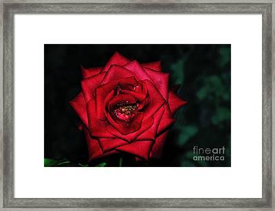 Rose By Night Light Framed Print