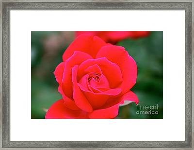 Rose Cascade Framed Print by Cathy Dee Janes