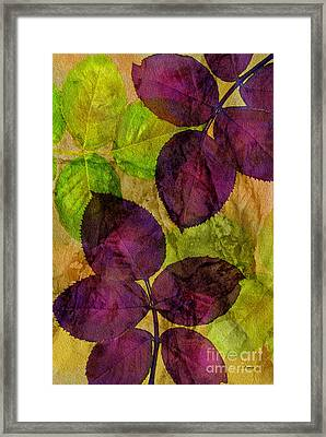 Rose Clippings Mural Wall Framed Print by Claudia Ellis