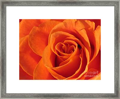 Framed Print featuring the photograph Rose Close Up by Art Photography