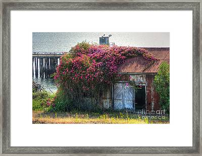 Rose Cover Framed Print by Chris Anderson