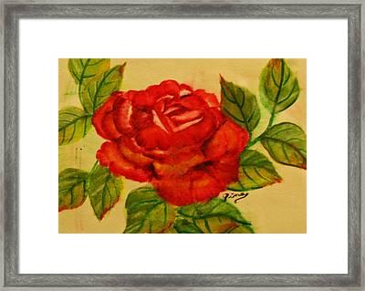Rose Framed Print by Dina Jacobs