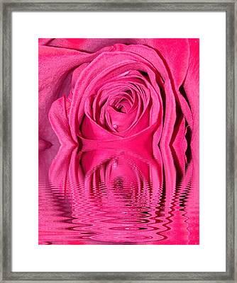 Rose Drops Framed Print