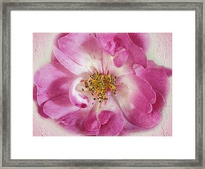 Framed Print featuring the photograph Rose by Elaine Teague