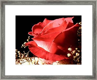 Rose Framed Print by Elizabeth Fredette