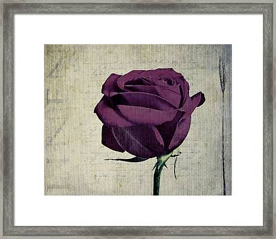 Rose En Variation - S09bt10 Framed Print by Variance Collections