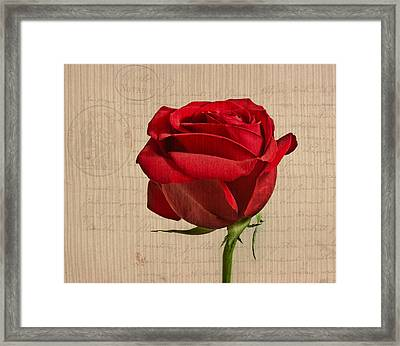 Rose En Variation - S2at03a Framed Print by Variance Collections