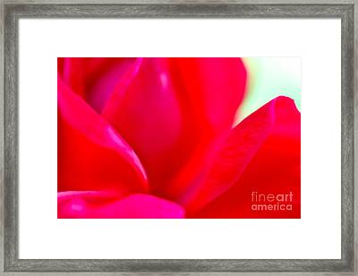 Rose Essence Study 1 Framed Print