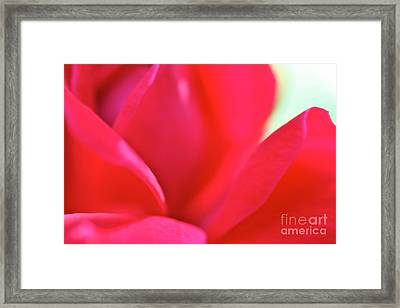 Rose Essence Study 2 Framed Print by Cathy Dee Janes