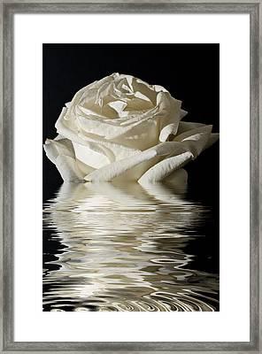 Rose Flood Framed Print by Steve Purnell