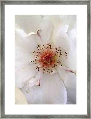Rose Flower Framed Print by Joyce Woodhouse