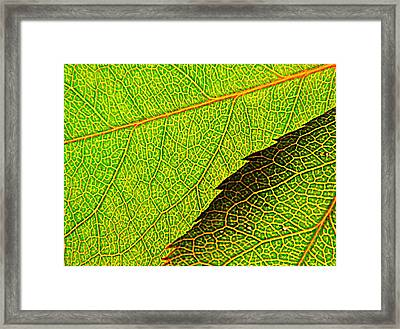 Rose Foliage Number Two Framed Print by Chris Berry