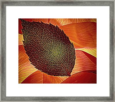 Rose Foliage On Rose Petals Framed Print by Chris Berry
