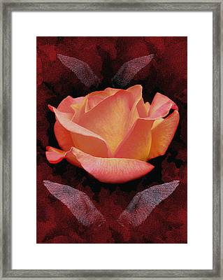 Rose From Angels Digital Art Framed Print by Costinel Floricel