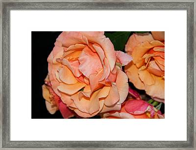 Rose Garden Victoria Framed Print
