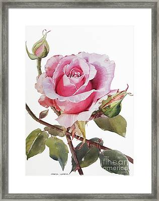 Pink Rose Grace Framed Print