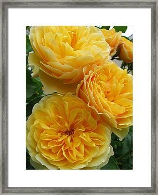 Rose Graham Thomas Framed Print by Sabine Edrissi
