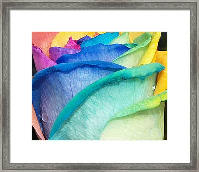 Framed Print featuring the photograph Rose by Haleh Mahbod