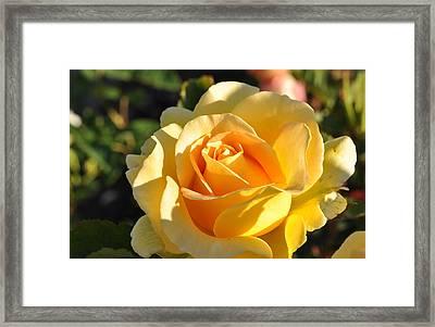 Rose - Honey Bouquet Framed Print by Sabine Edrissi
