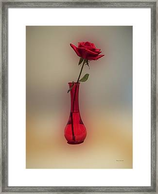 Rose In A Vase Framed Print by Thomas Woolworth