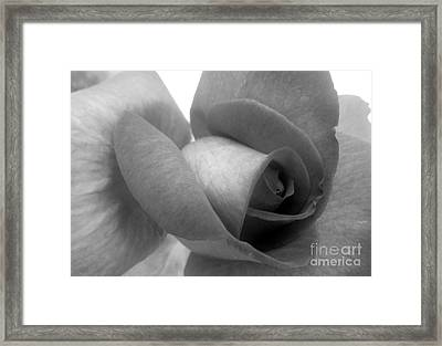 Rose In Black And White Framed Print by Ioanna Papanikolaou