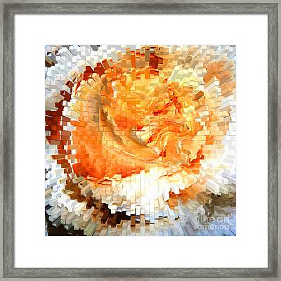 Rose In Bloom Framed Print
