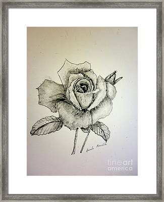 Rose In Monotone Framed Print