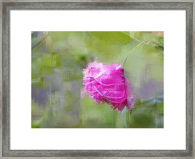 Framed Print featuring the photograph Rose In Pink by Linde Townsend