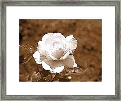 Rose In Sepia Framed Print by Victoria Sheldon