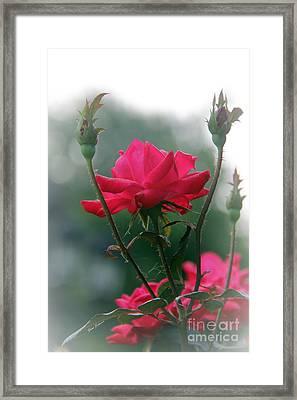 Rose In The Fogg Framed Print by Yumi Johnson