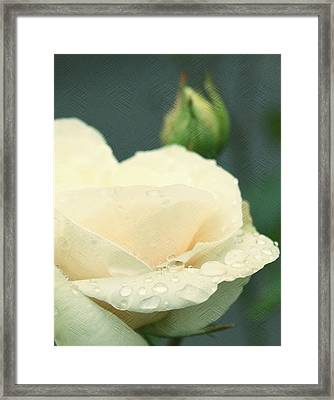 Rose In The Rain Framed Print by Cathie Tyler