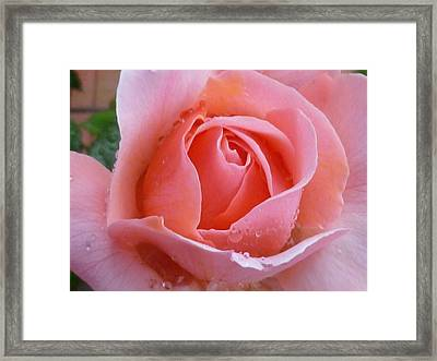 Framed Print featuring the photograph Rose In The Rain by Lingfai Leung