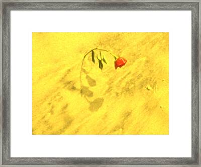 Rose In The Sand Framed Print by Joe  Burns