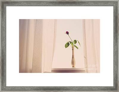 Rose In The Window Framed Print by Diane Diederich