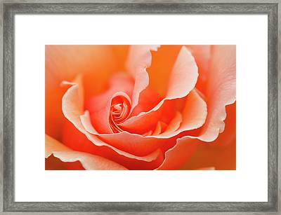 Rose 'just Joey' Creative Abstract Framed Print