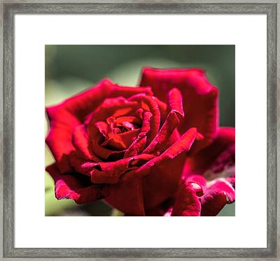 Framed Print featuring the photograph Rose by Leif Sohlman
