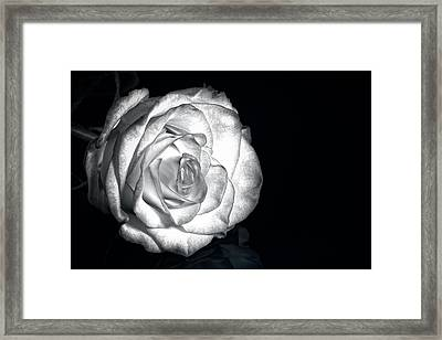Black And White Rose Framed Print by Tod and Cynthia Grubbs