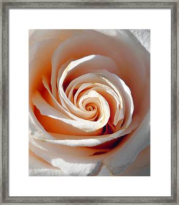 Rose Magnificent Spiral  Framed Print by Irina Sztukowski