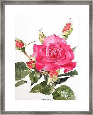 Watercolor Red Rose Margaret Framed Print