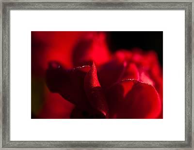 Rose Framed Print by Mark Alder