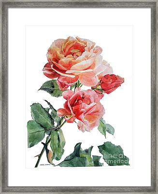 Watercolor Of Red Roses On A Stem I Call Rose Maurice Corens Framed Print