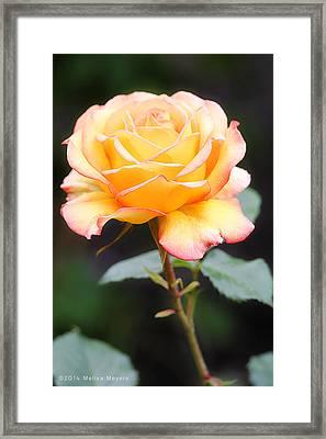 Rose Framed Print by Melisa Meyers