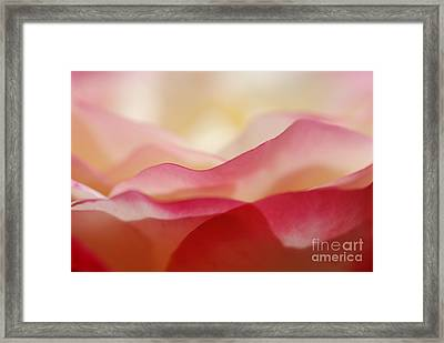 Rose Mountain Framed Print by Catherine Lau