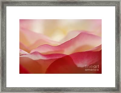 Rose Mountain Framed Print