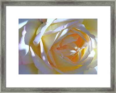 Rose Framed Print by N S