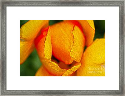 Rose Framed Print by Nur Roy