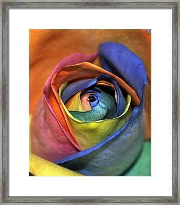 Rose Of Equality Framed Print